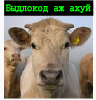 Толик Панков [userpic]