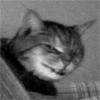 metallic_cat