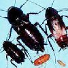 ljr_bugs